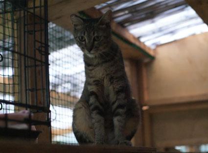 20080831fujimi33.JPG