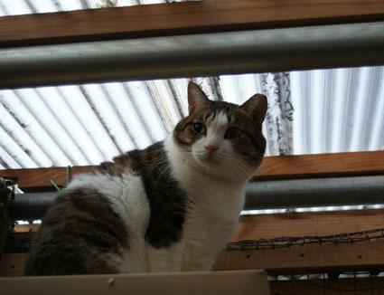 20081207fujimi56.JPG