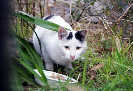 20090222kawasaki04.JPG