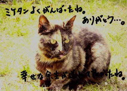 20101001miketan01.JPG