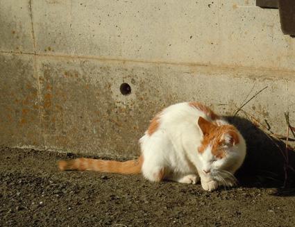 20110109home15_nana.JPG