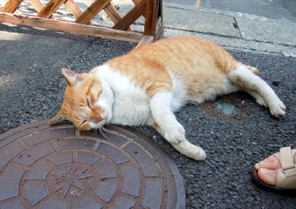 20110521kamakura03.JPG