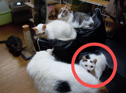 20111212home04_tera.JPG