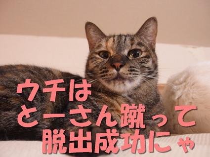 20151215tsutsuji02.jpg