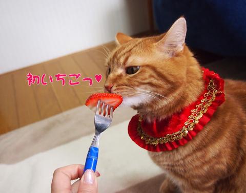 2012初いちご.jpg
