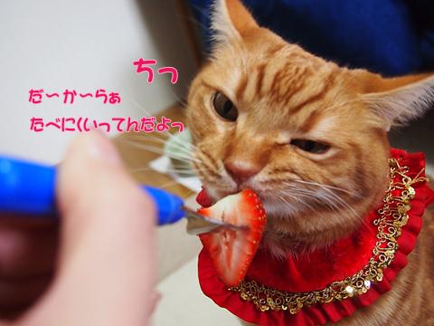 2012初いちご6.jpg