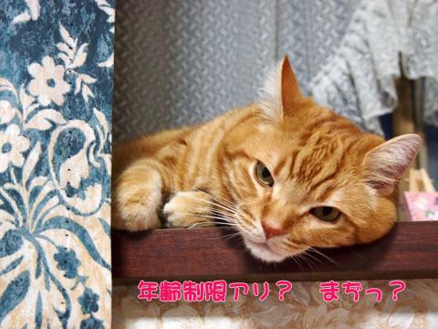 出窓にて2013-10.jpg