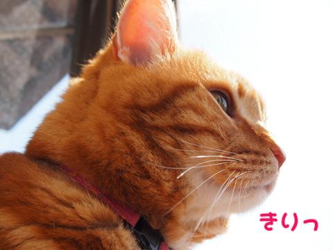 出窓にて2013-3.jpg