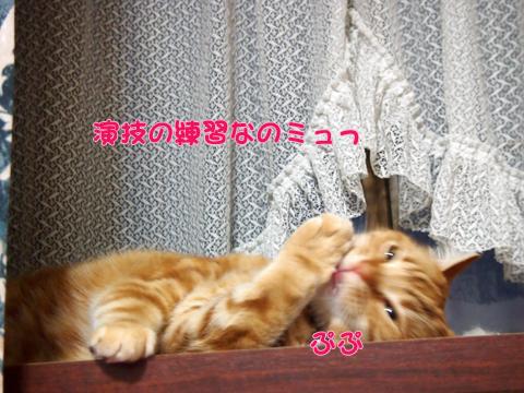 出窓にて2013-7.jpg