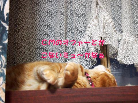 出窓にて2013-8.jpg