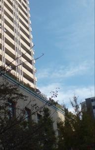 2009c.JPG