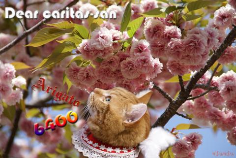 6400nice card(to caritas-san).jpg