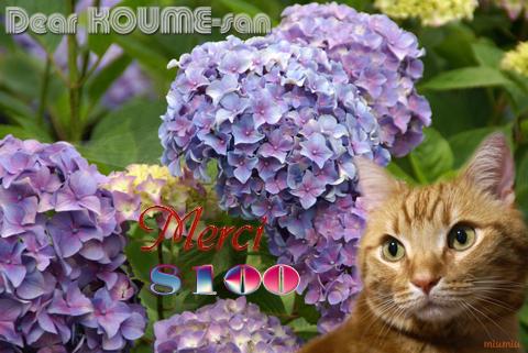 8100nice card(to koume-san).jpg