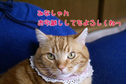 お引越し(よろしくね).jpg