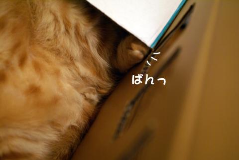 かくれんぼ(ふんばる足).jpg