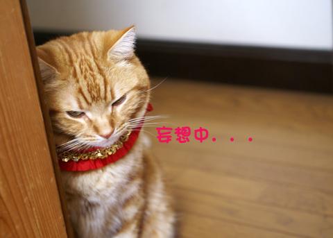 温泉セット(妄想中).jpg