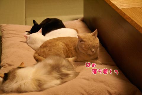 猫の時間48.jpg