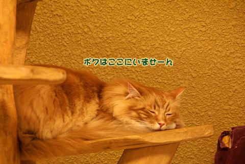 猫の時間65.jpg