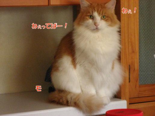 11-3ねえってば!.JPG