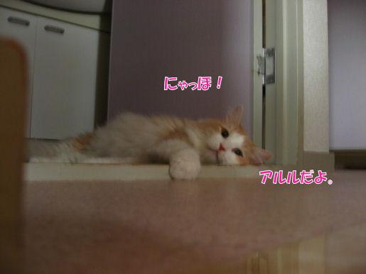 112-1ニャっほ.JPG