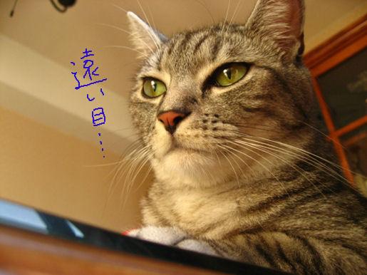 15-4 遠い目….JPG
