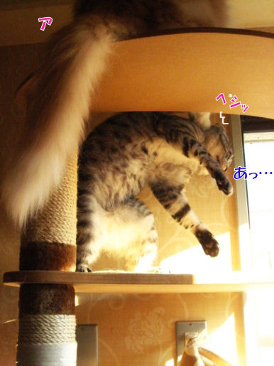 16-4猫パンチ.JPG
