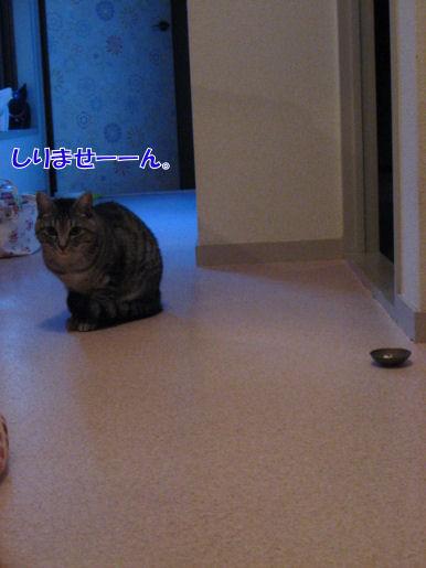 2-2犯猫.JPG