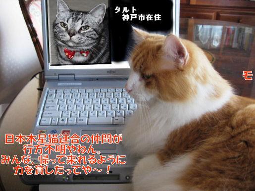 3タルちゃん帰って来て!.JPG