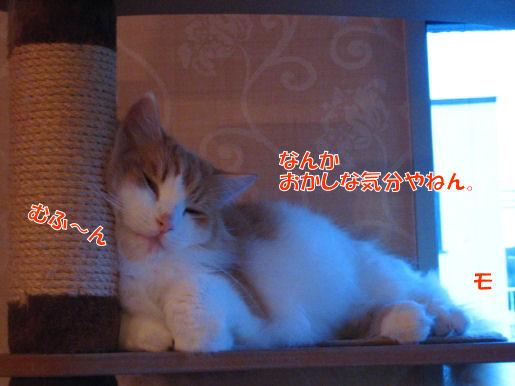 6-2オカマ疑惑.JPG