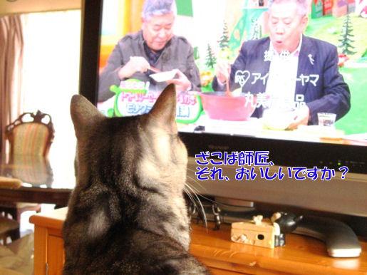 7-1テレビ見る.JPG
