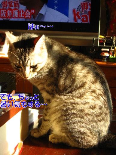 7-1早くも日向ぼっこ?.JPG