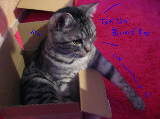 なかなか良い感じの箱.JPG