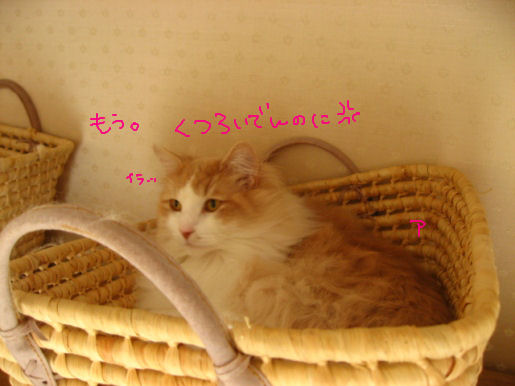 カチョー室アルル.JPG