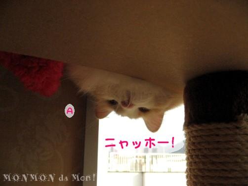 キャットタワーの上から覗き込んでます.JPG
