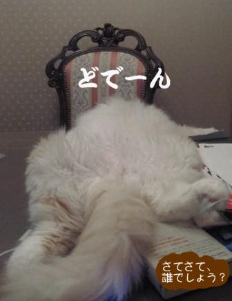 コピー ~ IMG_0227.JPG