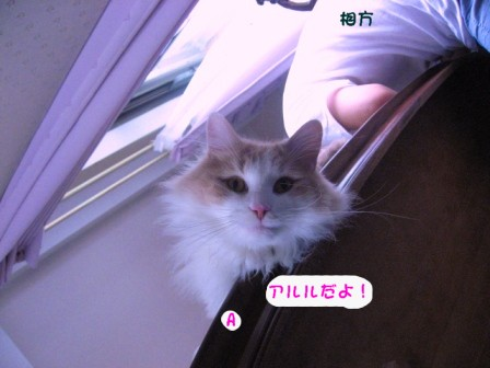 コピー ~ IMG_0238.JPG