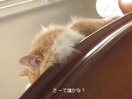 コピー ~ IMG_0244.JPG