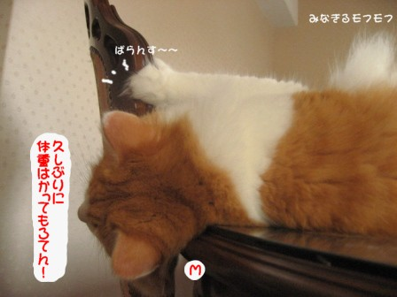 コピー ~ IMG_0245.JPG