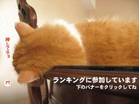 コピー ~ IMG_0249.JPG