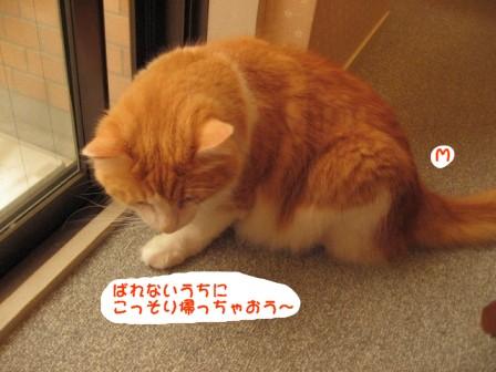 コピー ~ IMG_1044.JPG
