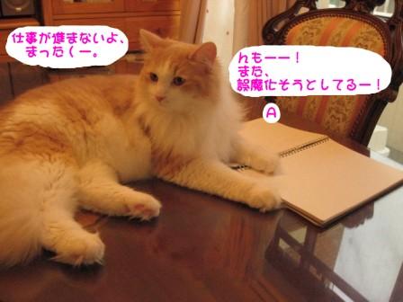 コピー ~ IMG_1059.JPG