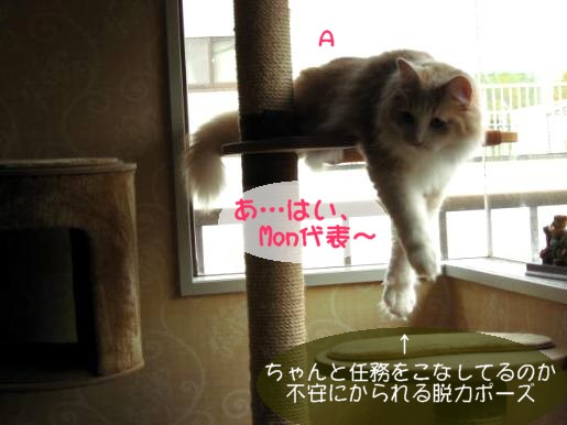 コピー ~ IMG_1438.JPG