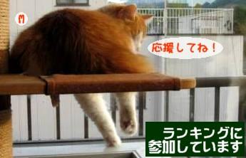 コピー ~ IMG_1623.JPG