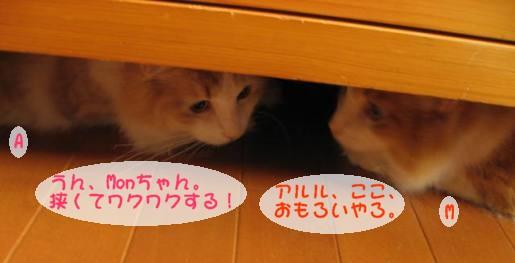 コピー ~ IMG_1731.JPG