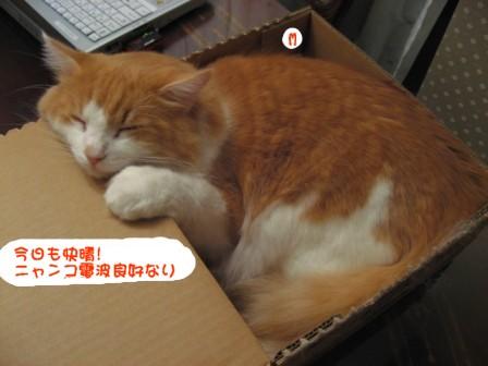 コピー ~ IMG_2310.JPG
