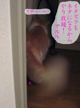 コピー ~ IMG_3684.JPG
