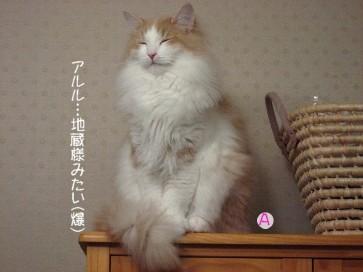 コピー ~ IMG_4005.JPG