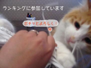 コピー ~ IMG_4619.JPG