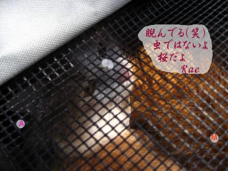 コピー ~ IMG_5554.JPG