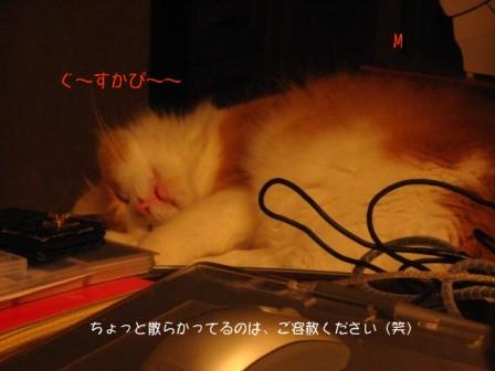 コピー ~ IMG_5603.JPG